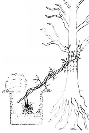 img_tree450